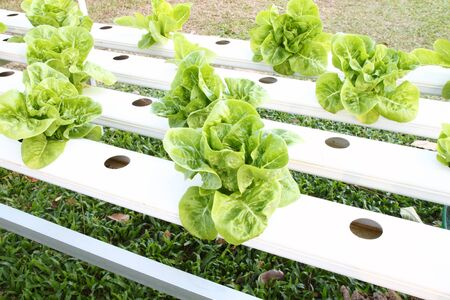 many kinds of soilless or hydroponic system Stock Photo - 17212309