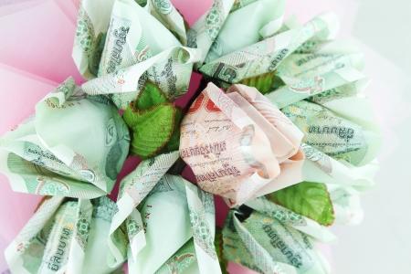 money flower on white background photo