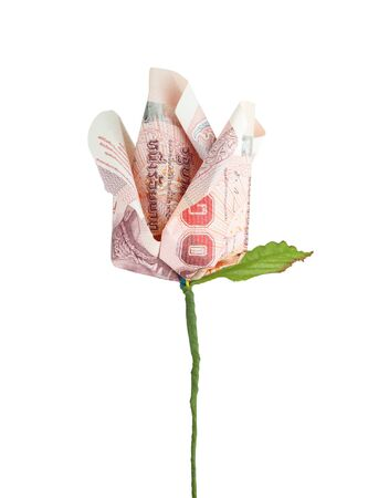 money flower on white background photo