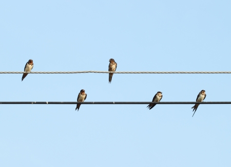 sparrow sitting on the power cable with sky Stock Photo