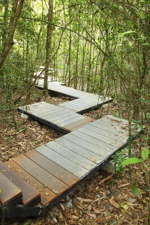 wooden boardwalk in forest, Khao Yai national park, Thailand photo