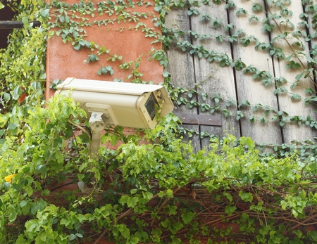 security CCTV camera with leaves photo