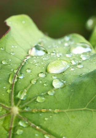 Close up of a water drops on leaves photo