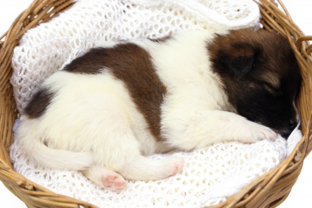 little puppy dog sleeping in basket photo