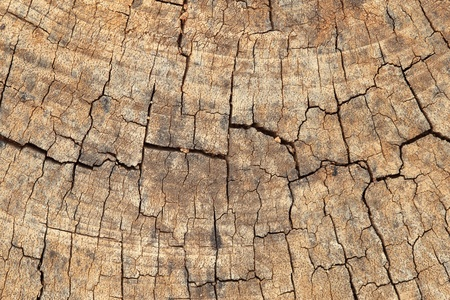 close-up of wood texture background photo