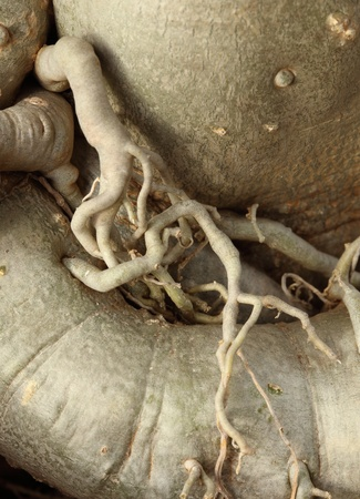 close-up roots of the plant photo