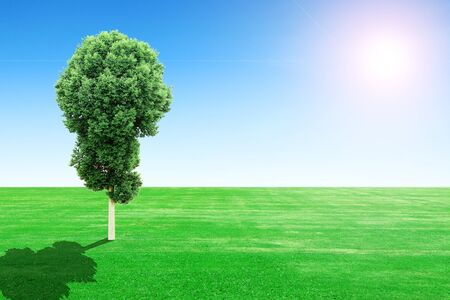 green grass field and tree with sun and blue sky Stock Photo - 22469282