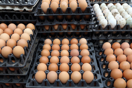 food safety: egg on trays at the market Stock Photo
