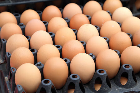 egg on trays at the market photo