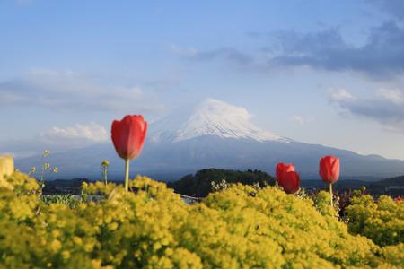 Mount Fuji, view from Lake Kawaguchiko, Japan photo