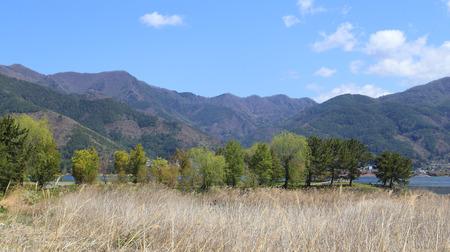 tree and mountain view at Lake Kawaguchiko, Japan  photo