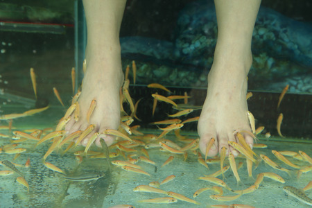 doctor fish wellness fish: Fish Spa for foot Skin Therapy Stock Photo
