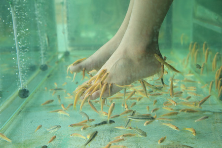 Fish Spa for foot Skin Therapy photo