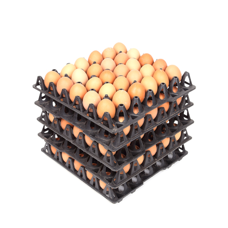 stack of eggs in tray on white background photo