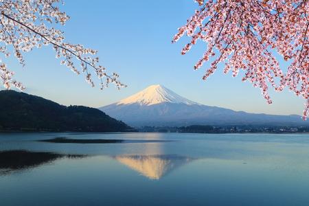 cereza: Monte Fuji con la flor de cerezo, vista desde el lago Kawaguchiko, Japón