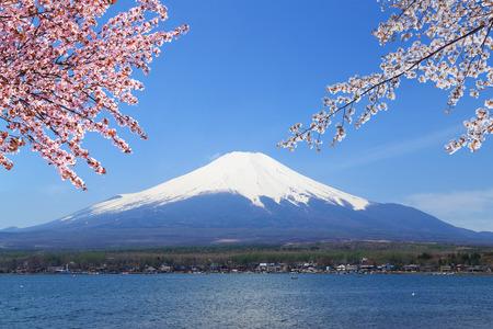 Mt.Fuji with Cherry Blossom at Lake Yamanaka, Yamanashi, Japan