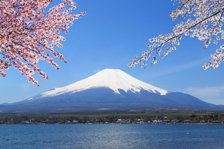 Mt.Fuji with Cherry Blossom at Lake Yamanaka, Yamanashi, Japan photo