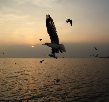 Seagull with sunset at Bang Pu beach, Thailand photo