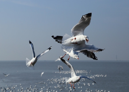 pu: Seagull flying under the sky at Bang Pu beach, Thailand Stock Photo