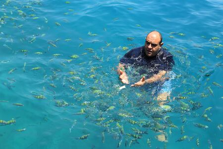 indopacific: Krabi,Thailand-March 16,2015:Tourist enjoy with feeding fish (Indo-pacific sergeant) in a tropical sea at Phi Phi island in Krabi, Thailand