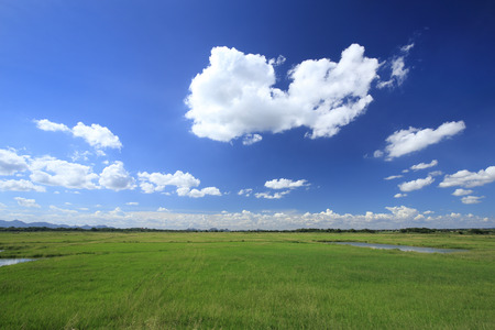 lawn grass: grass field with blue sky and cloud Stock Photo