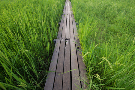 thailand: 100 year-old wooden bridge between rice field at Khonburi, Nakhon Ratchasima, Thailand Stock Photo