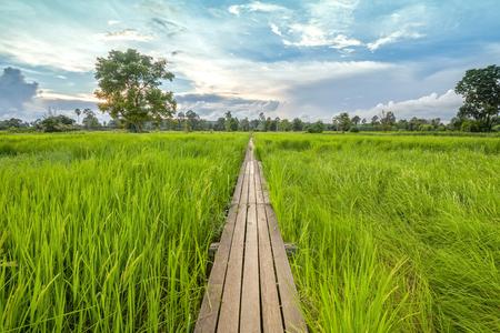 ratchasima: 100 year-old wooden bridge between rice field with sunlight at Khonburi, Nakhon Ratchasima, Thailand Stock Photo