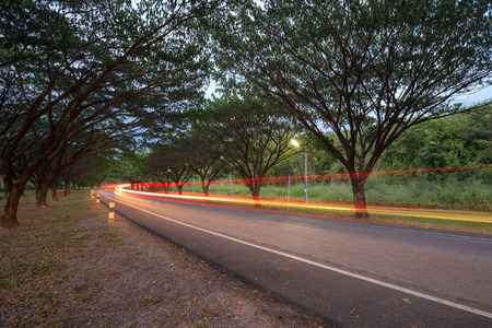 samanea saman: Cars pass on a country road running through with Samanea saman or Big rain tree, Thailand