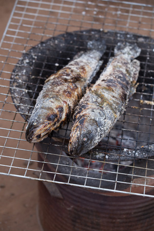 snakehead: grill striped snakehead fish with salt over charcoal