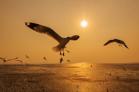Seagull flying with sunset on the sea at Bangpu, Thailand
