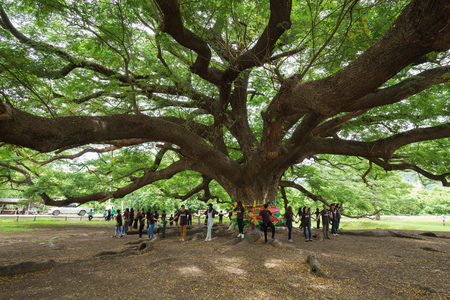 KANCHANABURI, THAILAND - June 24: Giant Monky Pod Tree with people visited on June 24, 2017 in Kanchanaburi, Thailand Editorial