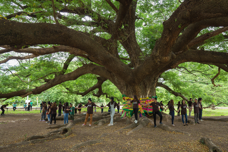 huge tree: KANCHANABURI, THAILAND - June 24: Giant Monky Pod Tree with people visited on June 24, 2017 in Kanchanaburi, Thailand