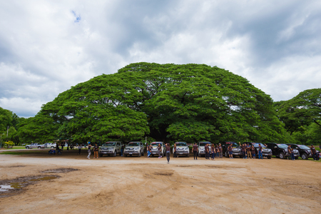 KANCHANABURI, THAILAND - June 24: Giant Monky Pod Tree with people visited on June 24, 2017 in Kanchanaburi, Thailand