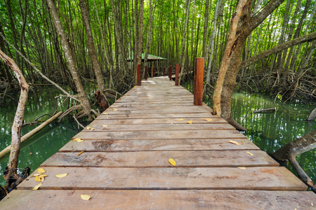 wooden bridge in a mangrove forest at Tung Prong Thong, Rayong province, Thailand