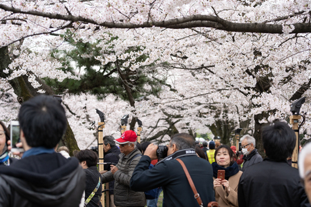 TOKYO, JAPAN - MARCH 29, 2019: Cherry blossom festival at Chidorigafuchi Park. Chidorigafuchi Park is one of the best place to enjoy it
