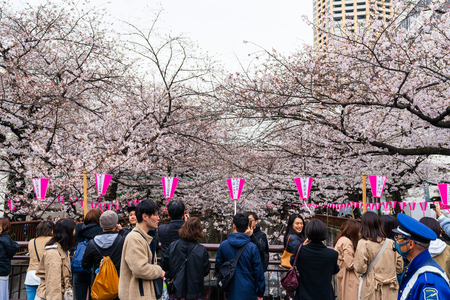 TOKYO, JAPAN - MARCH 29, 2019: Cherry blossom festival in full bloom at Meguro River . Meguro River is one of the best place to enjoy it Editorial