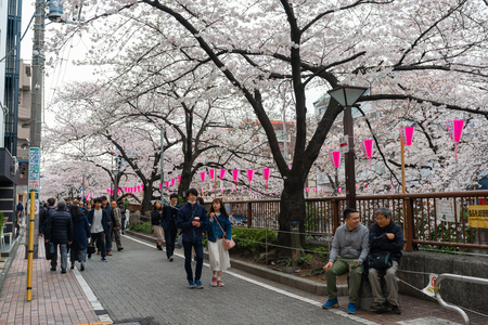 TOKYO, JAPAN - MARCH 29, 2019: Cherry blossom festival in full bloom at Meguro River . Meguro River is one of the best place to enjoy it Фото со стока - 123060100