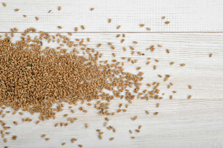 wooden panel: Spread pearl barley on wooden panel. Stock Photo