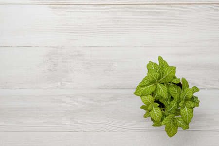 houseplant: Office workplace with green houseplant for decoration. Stock Photo