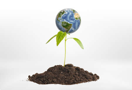 Close-up planet Earth on green sprout growing from the ground. Environmental issues. Natural resources. Ecosystem. Stock Photo