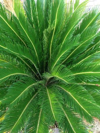 Nice green plant Stock fotó