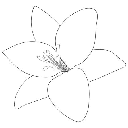 Vector stock illustration of a Lily. Outline of a plant on an isolated background. Coloring book for children and adults. Idea for a children's book, creating a greeting card, invitation. Flower sketch. Vectores