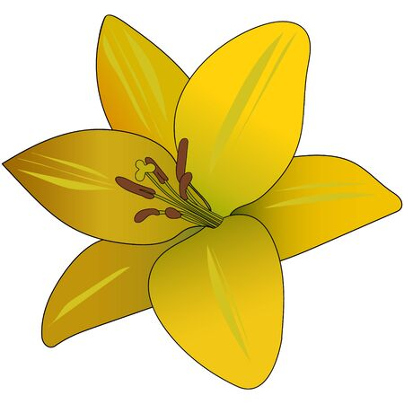 Color vector illustration of a yellow-orange Lily. Plant on an isolated background. Cartoon style. Idea for a sticker, greeting card design, book. Romantic print print. 矢量图像