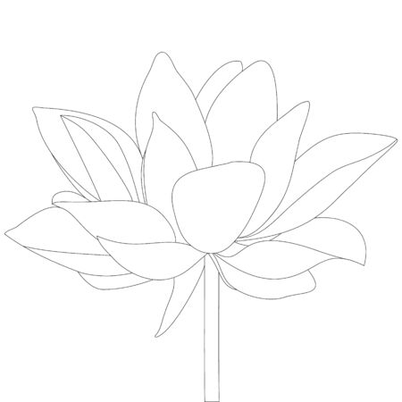 Vector stock illustration lotus. Water lily. The contour of the plant on an isolated background. Coloring book for children and adults. Idea for a childrens book, creating a greeting card, invitation. Flower sketch. Иллюстрация