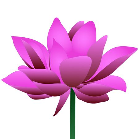 Color vector illustration of a Lotus. Water lily. A blooming rosebud. Flower on an isolated background. Idea for a sticker, greeting card design, invitation, book. Cartoon style.