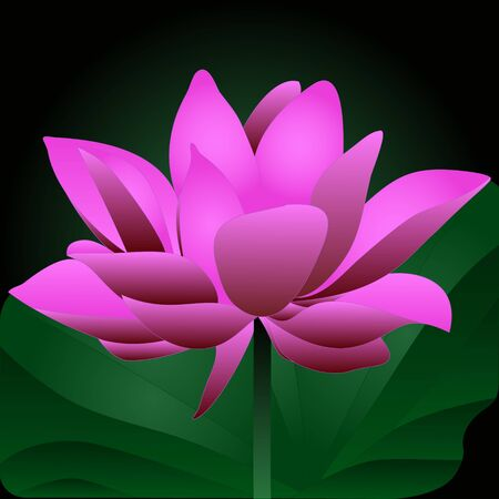 Color vector illustration of a mysterious flower in the night valley of lotuses. Water lily. A blooming rosebud. A plant on a green background in the moonlight. Idea for the design of a book, magazine, cover. Cartoon style.