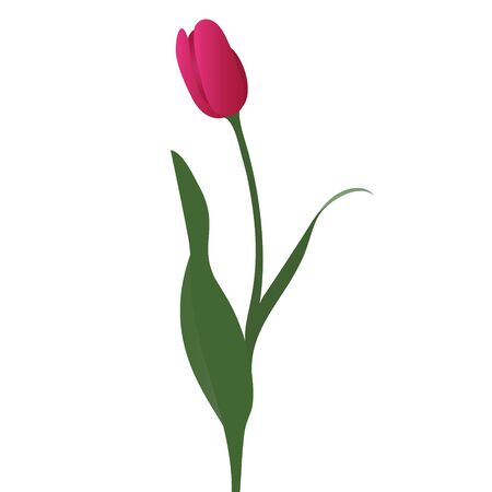 Color vector illustration of a Tulip. Bright pink Bud. Symbol of tenderness. Plant on an isolated background. Cartoon style. Idea for a sticker, greeting card design, book. Floral print.