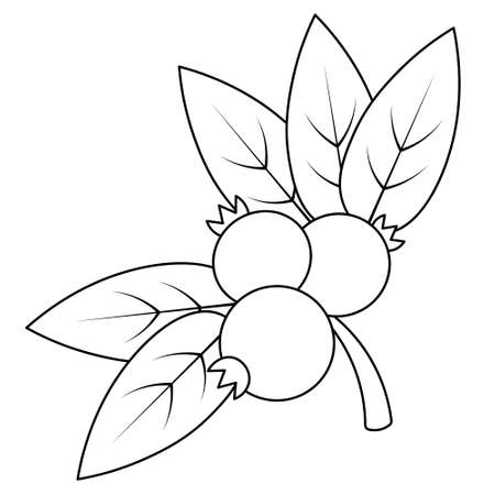 Lingonberry. A sprig of juicy berries. Vector illustration. Outline on an isolated white background. Doodle style. Sketch. Coloring book for children. Gathering the summer harvest. Seasonal product. Ilustração