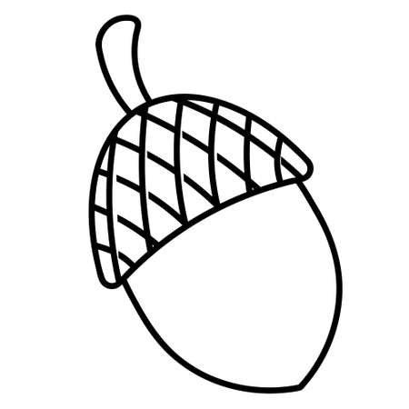 Acorn. The fruit of an oak with a hard shell. Vector illustration. Outline on an isolated white background. Doodle style. Sketch. Harvest of the autumn forest. Coloring book for children.