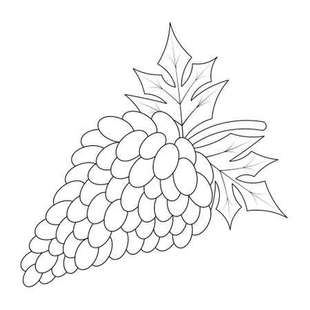 Bunch of grapes. A sprig of juicy berries. Foliage with veins. Vector illustration. Outline on an isolated white background. Doodle style. Sketch. Coloring book. Gathering the summer harvest.